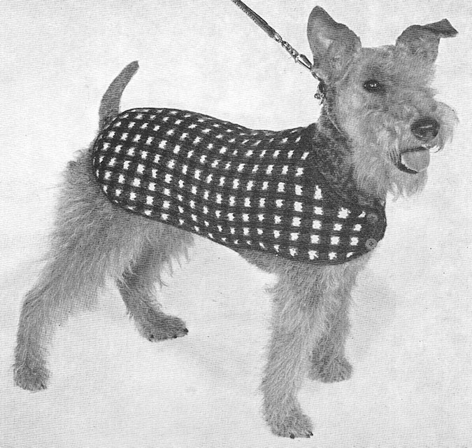 Diy Knitting Patterns : 1950 Dog Sweater Knitting Pattern