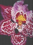 Colorful Orchid Cross Stitch Pattern