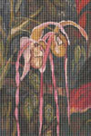 Exotic Orchids Cross Stitch Pattern
